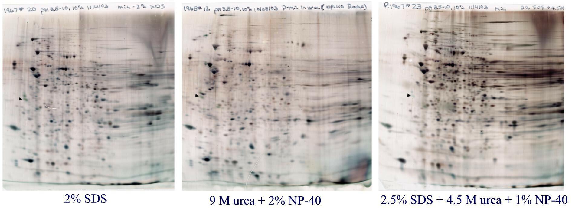 Sample preparation affects 2D gels pattern of Rat liver microsomes SDS, urea, or SDS /urea buffer