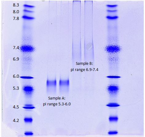 Isoelectric focusing gel to determine protein pH. IEF standards give a reference for pH ranges.