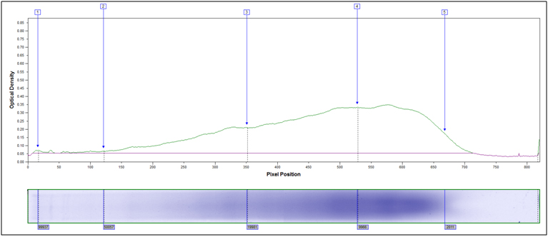 SDS PAGE Peak profile partially hydrolyzed soy flour. X-axis MW, y-axis Coomassie stain intensity