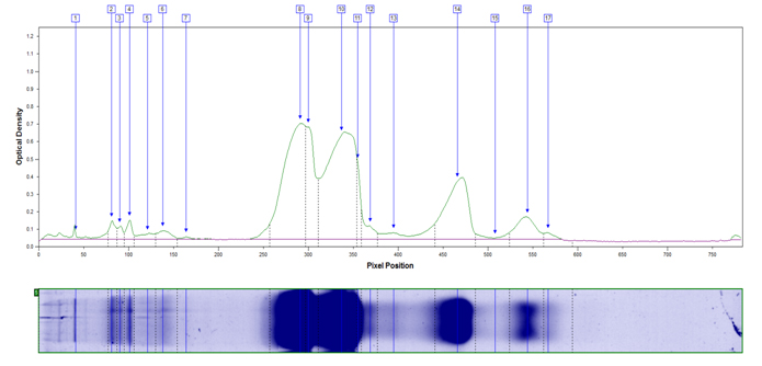 Relative quantification of nonfat dry milk proteins by Coomassie blue dye binding using 1D SDS PAGE